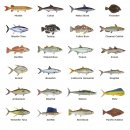 Fish Rod Decals